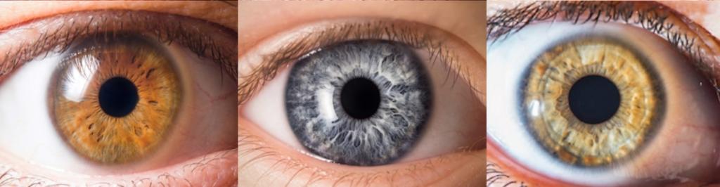 iris. iridologie